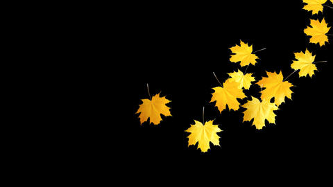 Autumn Leaves Falling 04 Animation