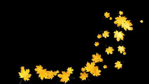 Autumn Leaves Falling 07 Animation