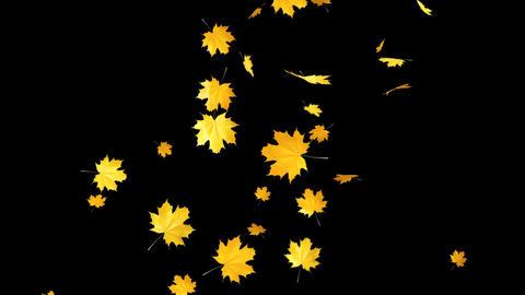 Autumn Leaves Falling 08 Animation