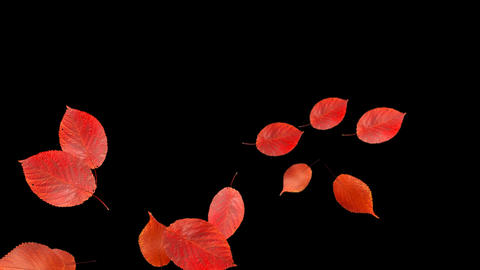 Red Autumn Leaves Falling 4 Animation