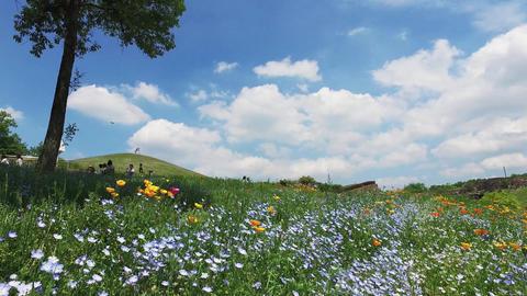 空と花畑 ライブ動画