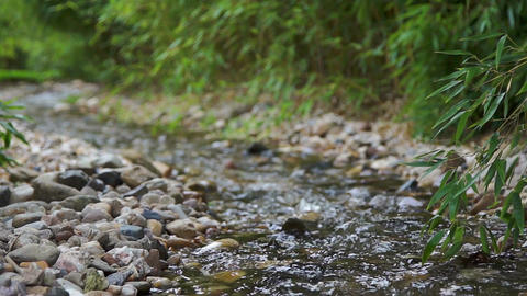 Tranquil scene with a creek stream close up Footage