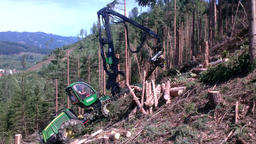 Harvester cutting logs Bild