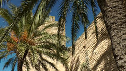 Spain Mallorca Island Alcudia 030 palm trees throw shadows on city wall