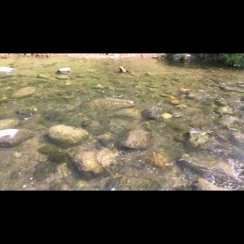 川1 ビデオ