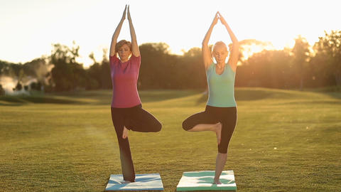 Charming adult women standing in yoga tree pose Footage