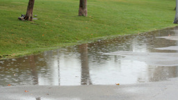 RAINY DAY AT PARK Stock Video Footage