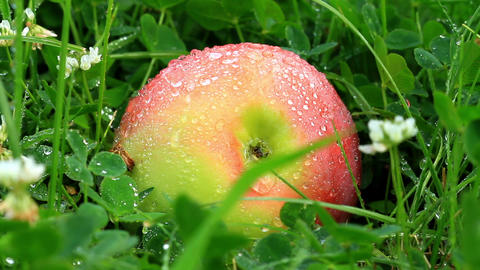 apple on grass Stock Video Footage