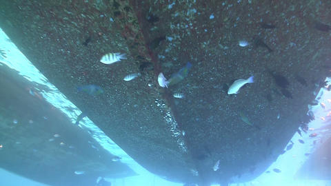 Group of divers preparing to dive, Red sea Stock Video Footage