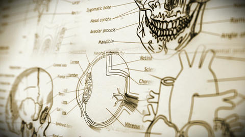 Human Body Parts v 2 4 Animation