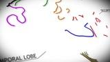Human Brain v 2 1 Animation