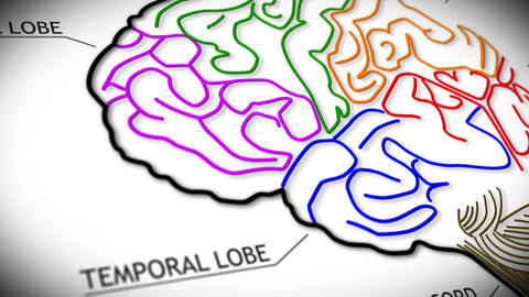 Human Brain v 2 1 Stock Video Footage