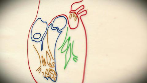 Human Heart v 2 4 Stock Video Footage