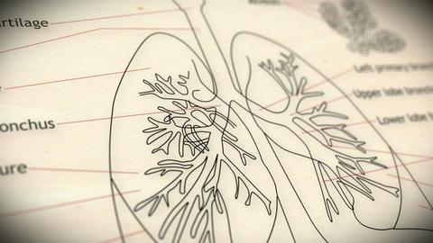 Human Lung v 2 1 Animation