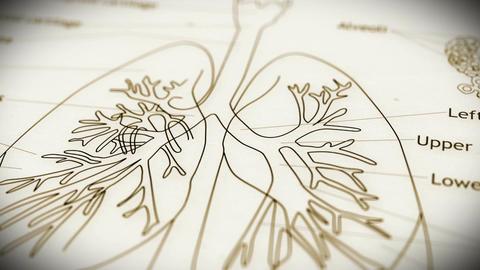 Human Lung v 2 3 Animation
