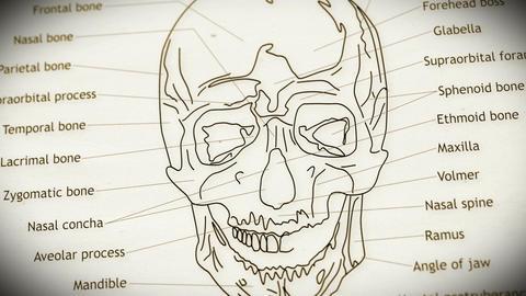 Human Skull v 2 2 Animation