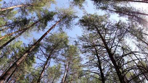 clouds behind the trees in the forest Stock Video Footage