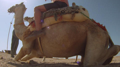 Camel ride Stock Video Footage