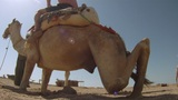Camel ride Footage
