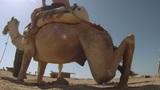 Camel ride Footage