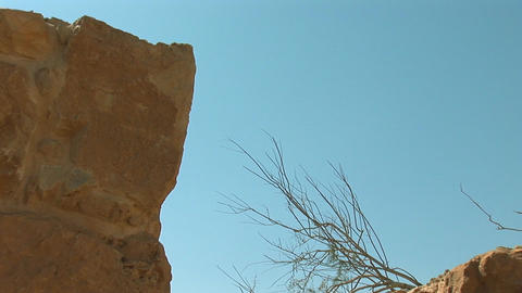 dead tree at the fortress of Masada b Stock Video Footage
