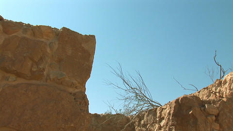 dead tree at the fortress of Masada b Footage