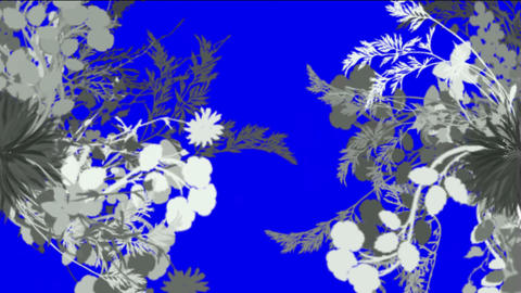 flower & plant growing Animation