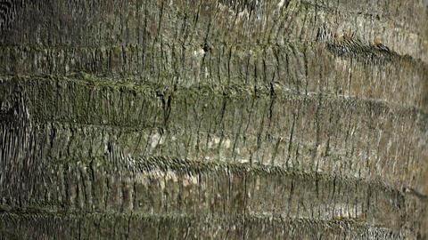 Palm tree bark texture, 4K Footage