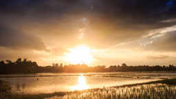 Sunlight from behind Clouds over Water Rice Fields at Sunset Footage