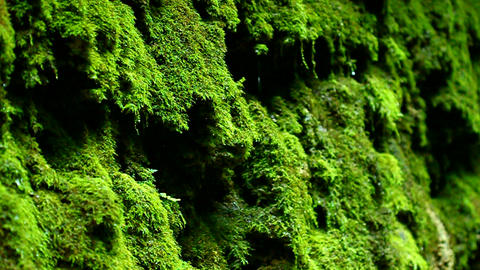 Dripping Moss Shades State Park Indiana stock footage
