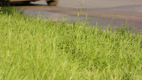 Green Grass on a Roadside Footage
