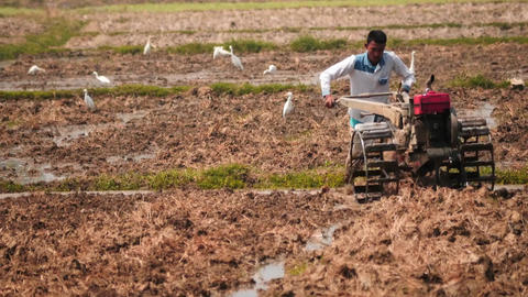 Ploughman work front view on the field of rural Myanmar smooth zoom Footage