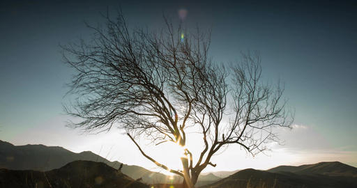 The sun sets over the mountains and passes through the branches of a tree. End o Footage