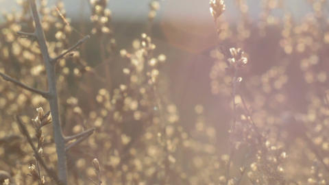 Abstract background of highlights, sun rays and dry grass. tracking camera Live Action