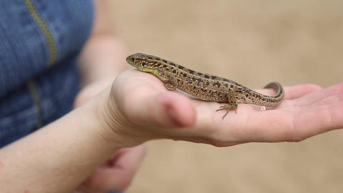 Lizard crawling on a girl's hand Live Action