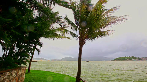Strong Wind Shakes High Palms against Sea Cloudy Sky Footage