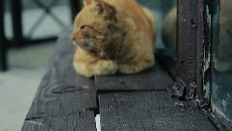 Street cat rest on the windowsill and look right Stock Video Footage