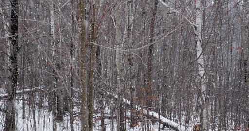 Snowing in the Forest Footage