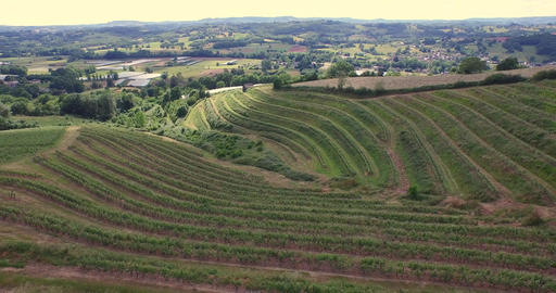The landscape and climate of the hills Saillant are conducive to the vine, Allas Footage