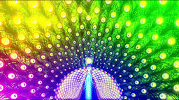 Peacock open screen feathers colorful flash CG動画素材