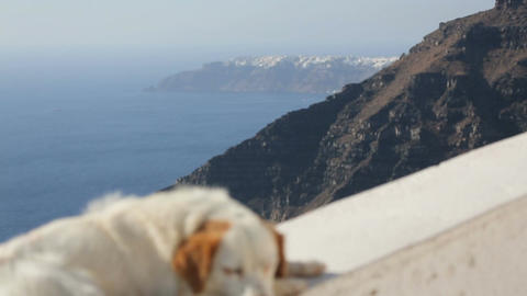 Sleepy dog lying in sunny street of resort town, volcanic islands washed by sea Footage