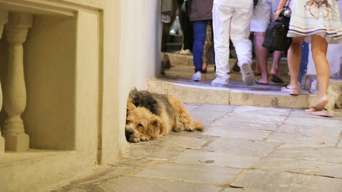 Crowds of indifferent people walking by miserable sick stray dog lying in street Footage