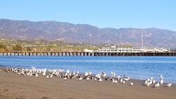Seabirds line the shore at Stearns Wharf in Santa Barbara Footage