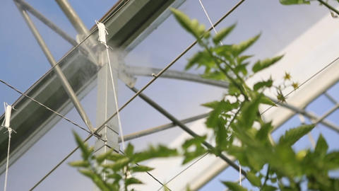 Greenhouse Fogging stock footage