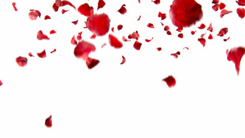 falling petals roses 3d animation with alpha channel Animation