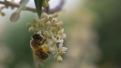 Bee Flower Slow Motion Footage