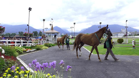 Race Horses at Show Rink 画像
