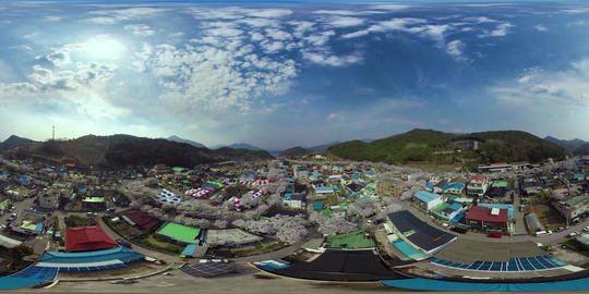 Cherry Blossom in Cheongpung lakeside VR 360° Video