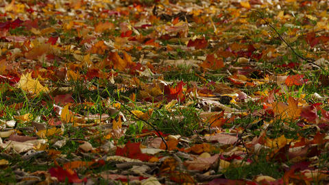 4K Ungraded: Orange, Red and Yellow Leaves of Maple and Oak Sway With Wind Footage