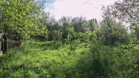 Abandoned garden Footage